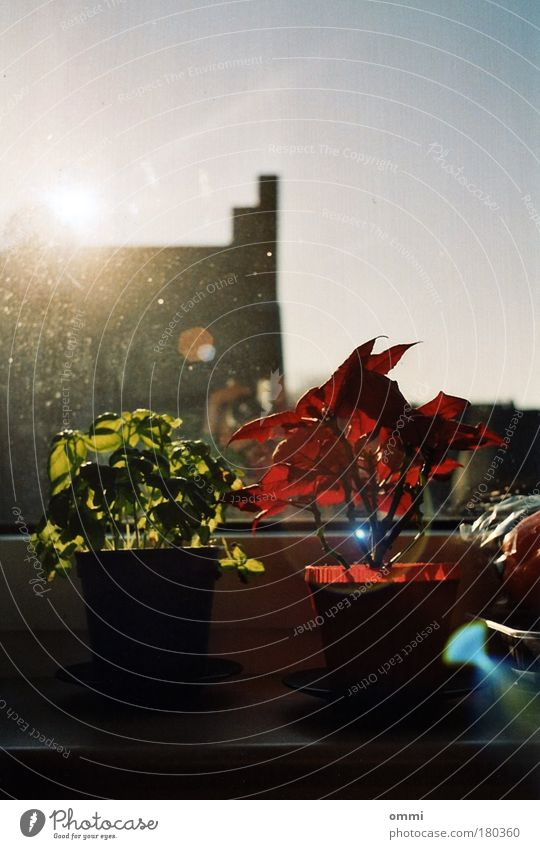 Fensterbankstadtpark Dekoration & Verzierung Fensterbrett Pflanze Blatt Topfpflanze Haus Gebäude Fensterscheibe dreckig hell schön grün rot Frühlingsgefühle
