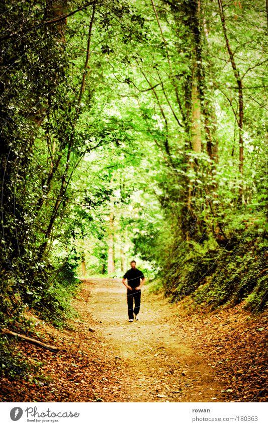 wandeln Mensch Mann Natur Baum schwarz Einsamkeit Erwachsene Wald dunkel Landschaft Wege & Pfade Wärme träumen gehen wandern maskulin