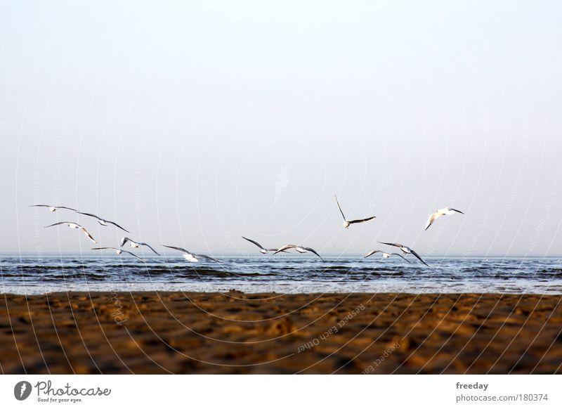 ::: Ziviler Tiefflug ::: Wasser Meer Pflanze Strand Tier Ferne Freiheit Luft Vogel Küste Nebel Wind Insel Tiergruppe Klima Sehnsucht