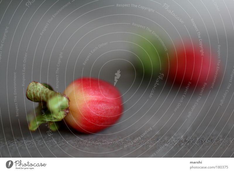 miniradieschen Farbfoto Nahaufnahme Detailaufnahme Makroaufnahme Unschärfe Schwache Tiefenschärfe Lebensmittel Natur Pflanze Sträucher Blatt Blüte Grünpflanze