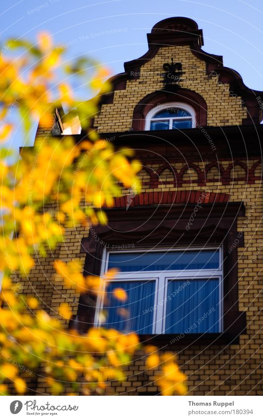 Der Herbst kommt! Himmel alt schön Baum Pflanze Blatt Haus Herbst Fenster Umwelt Gebäude Wetter Deutschland Fassade Europa Bauwerk