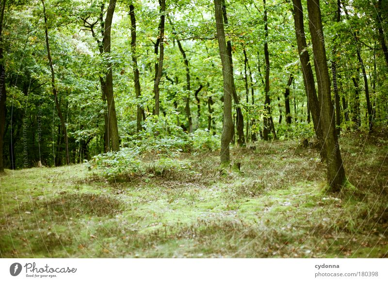 Grün Farbfoto Außenaufnahme Menschenleer Textfreiraum unten Tag Licht Schatten Kontrast Schwache Tiefenschärfe Zentralperspektive Leben Wohlgefühl Erholung