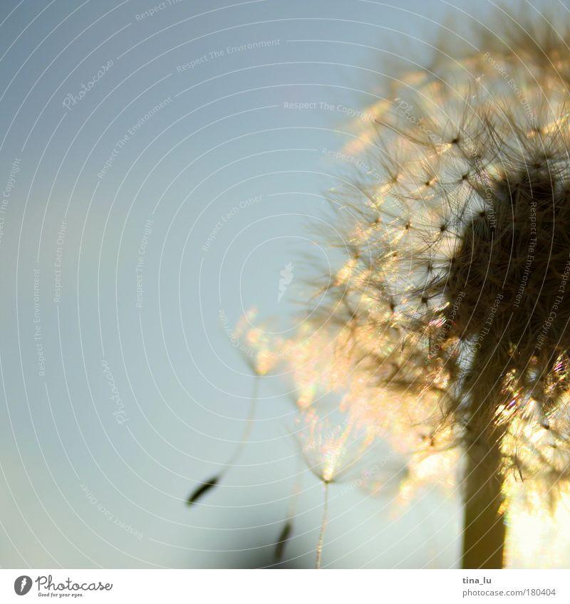 der sommer ist vorbei Natur schön Pflanze Sonne Sommer Blume Wiese Leben Gras Glück Wärme Stimmung Zufriedenheit Kraft gold glänzend