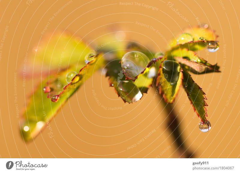 Wassertropfen Umwelt Natur Landschaft Frühling Sommer Herbst schlechtes Wetter Regen Pflanze Sträucher Blatt Grünpflanze Wildpflanze Garten Park Kugel Tropfen