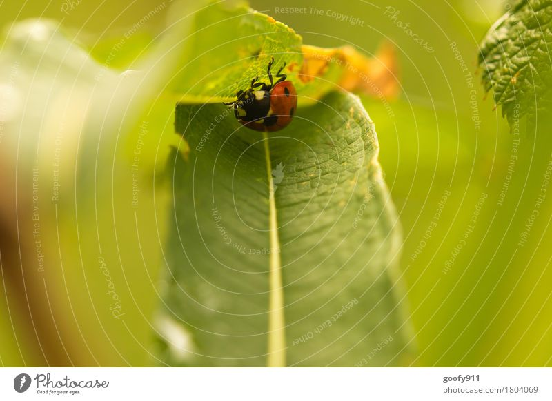 In Deckung Umwelt Natur Erde Luft Schönes Wetter Pflanze Sträucher Blatt Grünpflanze Wildpflanze Garten Park Wiese Tier Nutztier Wildtier Käfer Tiergesicht