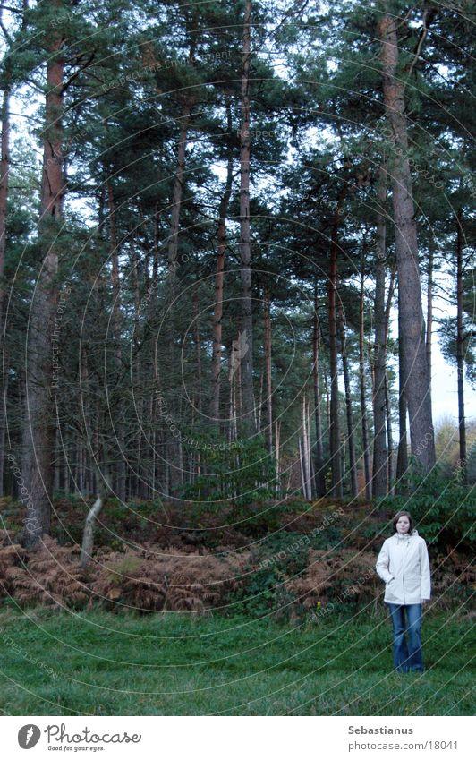 Knuffelchen allein im Wald #2 Frau Natur Baum Herbst Landschaft stehen Nadelbaum