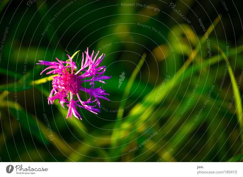 Frühling Farbfoto mehrfarbig Außenaufnahme Menschenleer Textfreiraum rechts Tag Abend Licht Kontrast Sonnenlicht Umwelt Natur Pflanze Tier Erde Schönes Wetter