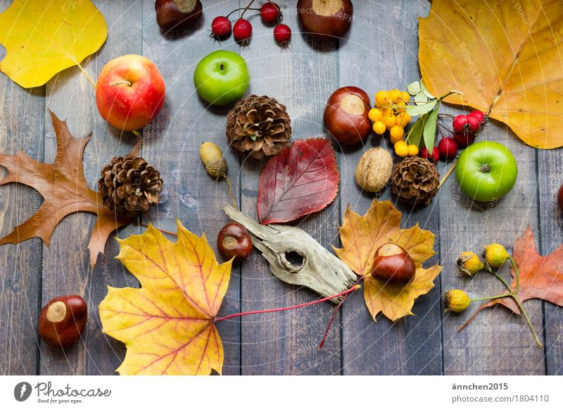 Herbstsammlung mehrfarbig Jahreszeiten gelb orange rot grün Sammlung ansammeln Leidenschaft Holz Zapfen Hagebutten Kastanie Eicheln Beeren Apfel Suche
