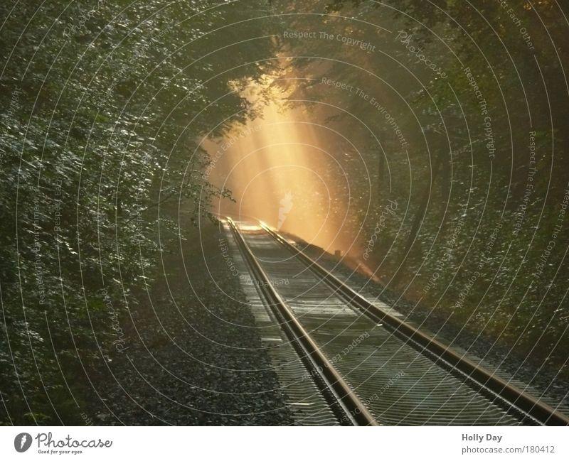 """""""Licht bricht durch in die Dunkelheit, ... Zeitmaschine Natur Pflanze Sonnenlicht Sommer Wetter Nebel Baum Wald Westerwald Menschenleer Verkehrswege"""