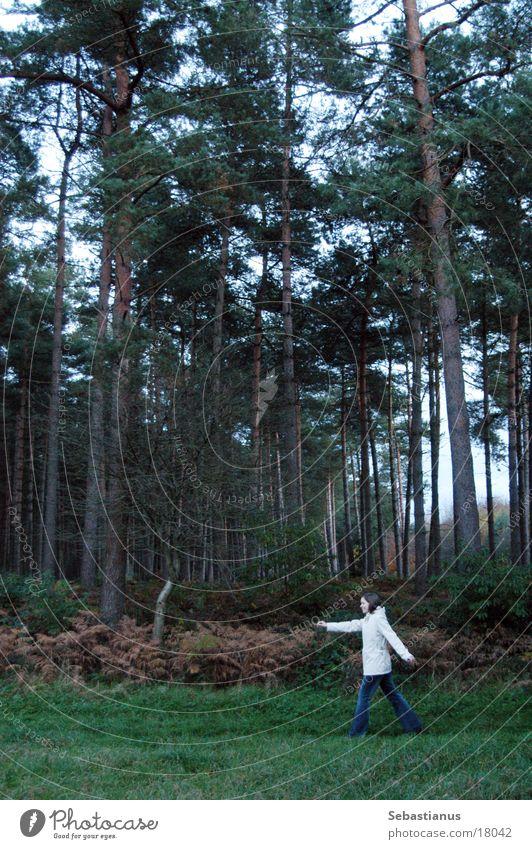 Knuffelchen allein im Wald #1 Frau Natur Baum Herbst Landschaft laufen Nadelbaum