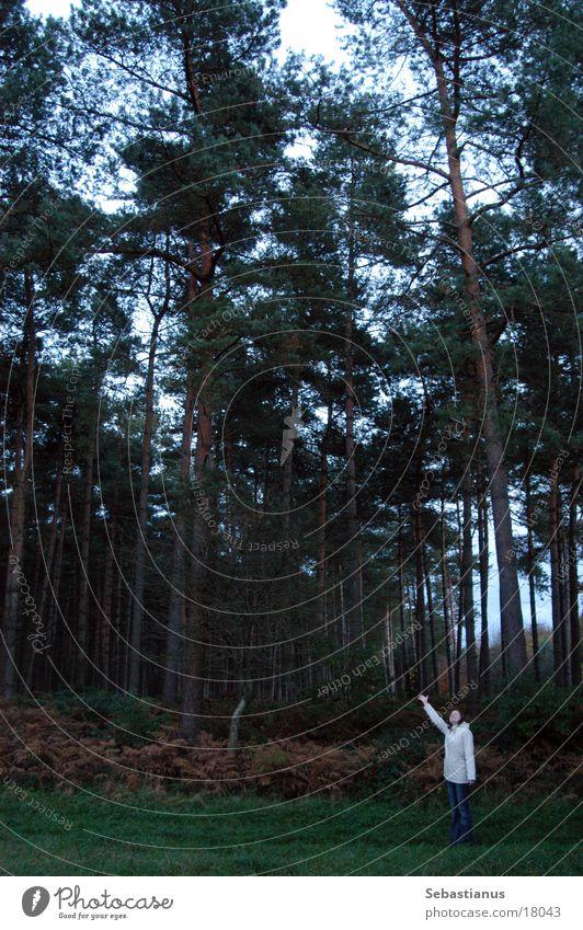 Knuffelchen allein im Wald #3 Frau Natur Baum Herbst Landschaft stehen zeigen Nadelbaum