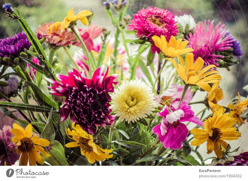 Strauß (bunt) Natur Pflanze Sommer Blume Blüte Blühend natürlich mehrfarbig grün rot Floristik Blumenstrauß Wiesenblume Dahlien Sonnenbraut Farbfoto