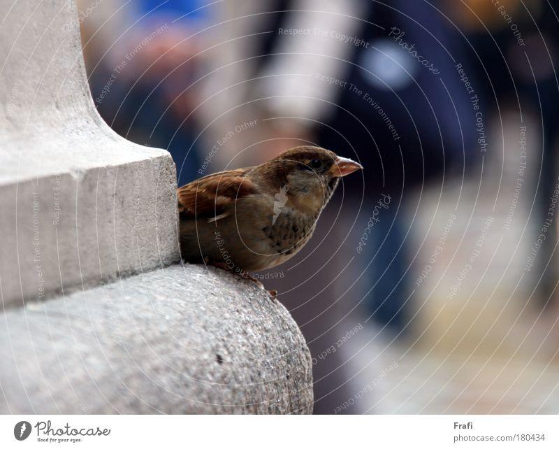Piepmatz Sonne Ferien & Urlaub & Reisen Tier Herbst Bewegung Freiheit Glück lachen träumen Zufriedenheit Vogel klein Fröhlichkeit Tourismus Kitsch Kultur