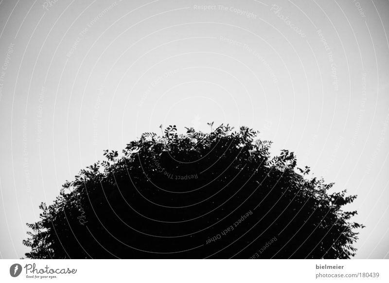 sonne auf erden Schwarzweißfoto Außenaufnahme Menschenleer Textfreiraum oben Textfreiraum unten Textfreiraum Mitte Hintergrund neutral Tag Kontrast Silhouette