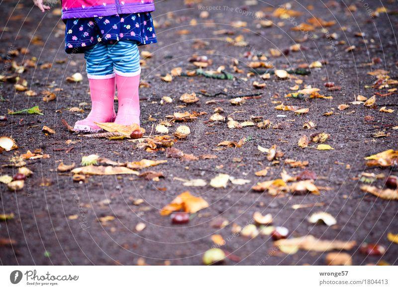Herbstzeit Kind Kleinkind Beine 1 Mensch 1-3 Jahre Kastanie stehen stachelig unten blau braun mehrfarbig rosa schwarz herbstlich Oktober Regen Herbstlaub