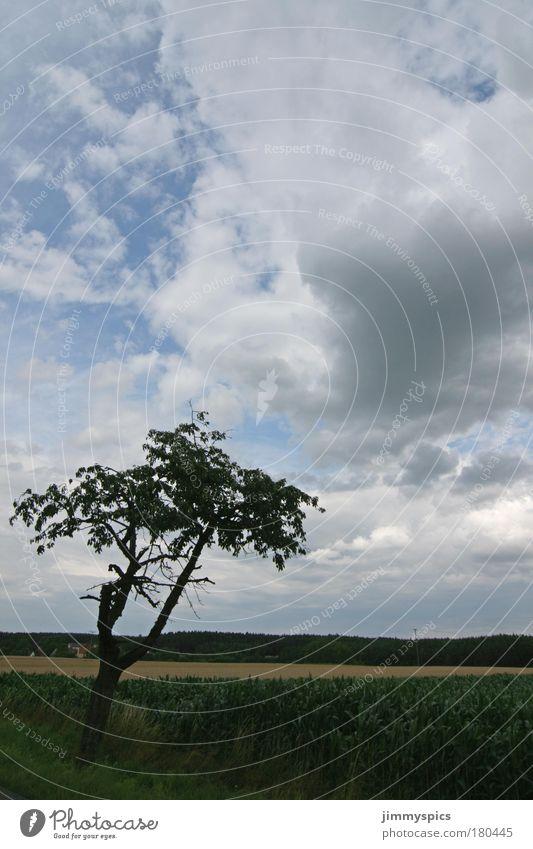 Landschaft Farbfoto Außenaufnahme Menschenleer Tag Natur Himmel Wolken Sommer Schönes Wetter Baum Feld Freundlichkeit hoch positiv