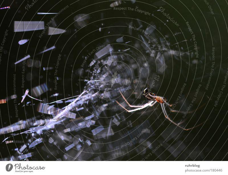 Spinnenetz glitzert im Sonnenlicht Farbfoto Außenaufnahme Makroaufnahme Licht Lichterscheinung Sonnenstrahlen Gegenlicht Natur Lichtbrechung Tier Netz glänzend