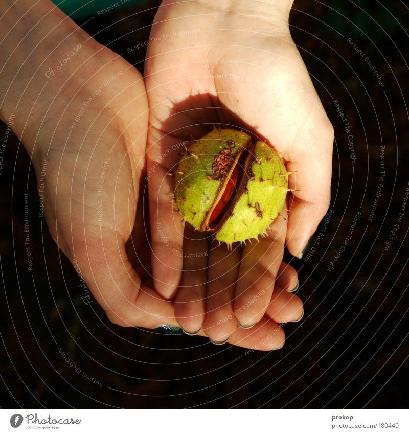 Herbst halten Mensch Natur Hand Pflanze feminin Umwelt Beginn Hoffnung Schutz festhalten Samen Geburt Umweltschutz finden Stachel