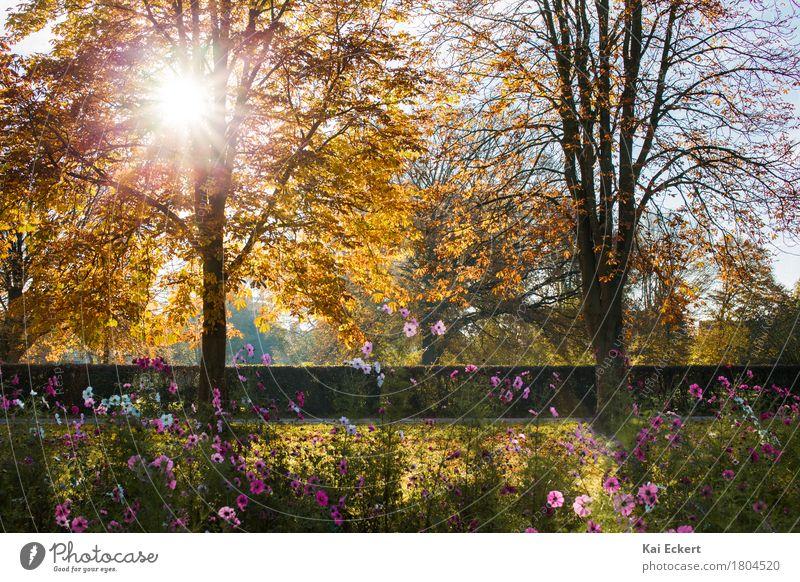 Einfach Herbst! Natur Landschaft Pflanze Schönes Wetter Baum Blume Blüte Park braun mehrfarbig gelb gold orange rosa Glück Lebensfreude Optimismus Zufriedenheit