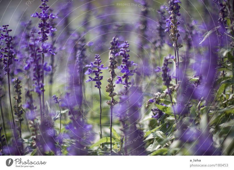the beauty around Natur schön Blume grün Pflanze Blatt Farbe Wiese Blüte träumen Park klein ästhetisch Romantik violett rein