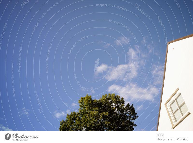 Blankenese Himmel blau weiß grün Baum Ferien & Urlaub & Reisen Sommer Haus Erholung Umwelt Fenster Holz Garten Stein Luft Zufriedenheit
