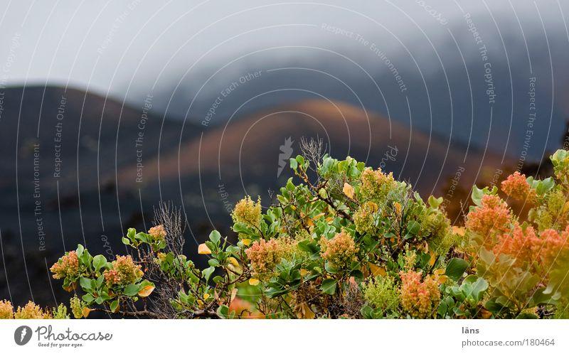 neues leben Himmel Pflanze Blatt Wolken Berge u. Gebirge Landschaft Kraft Nebel Umwelt Erde Hoffnung Wachstum Sträucher authentisch außergewöhnlich Urelemente