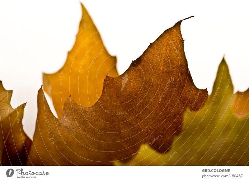 konservierte Sonnenstrahlen Natur weiß Pflanze Blatt Tod Herbst Gefühle Traurigkeit Park braun Stimmung natürlich Hoffnung Schönes Wetter Vergänglichkeit Trauer