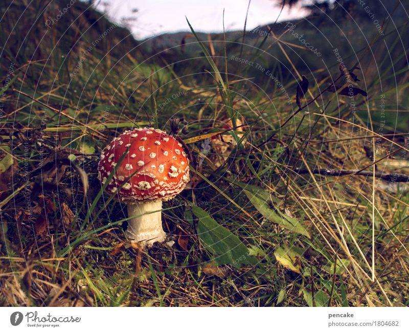 sören der 888zigste Natur Pflanze Landschaft rot Wald Berge u. Gebirge Herbst Gras ästhetisch Flussufer Pilz Norwegen Fliegenpilz