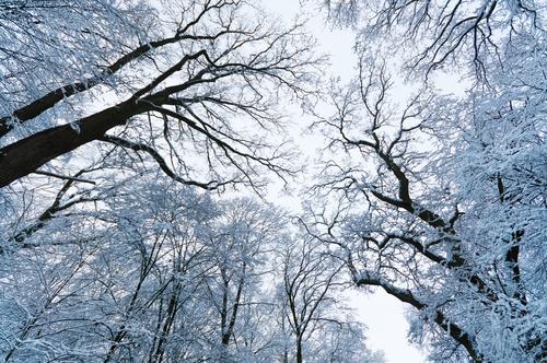 Eiswald Himmel Natur schön weiß Baum ruhig Winter Wald kalt oben Idylle Perspektive hoch fantastisch Frost