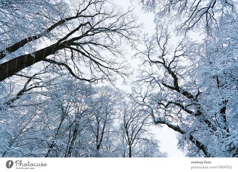 Eiswald Winterurlaub Natur Himmel Frost Baum Wald fantastisch hoch kalt oben schön weiß ruhig Idylle Perspektive Baumkrone Baumstamm Frosttag Kälteeinbruch