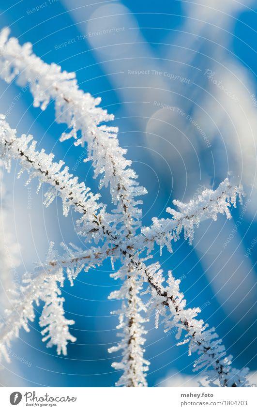 Berührungspunkt Natur blau weiß kalt Hintergrundbild glänzend Eis Vergänglichkeit berühren Frost Zusammenhalt bizarr filigran Eiskristall zerbrechlich