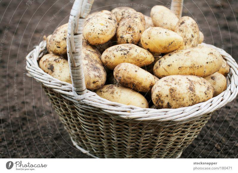 Kartoffeln Ernte Ernten Korb alt Gemüse Heftklammer Lebensmittel Landwirtschaft Ackerbau dreckig niemand