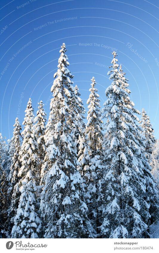 Fichtenwald Winter Wald Schnee Finnland nordisch Finnisch Landschaft Baum geschneit Wildnis