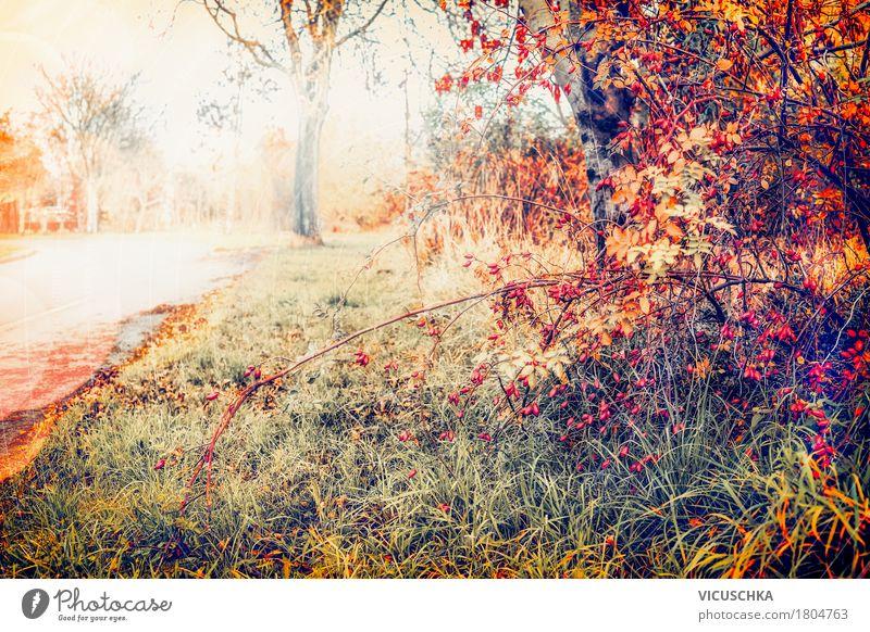 Herbst Natur mit rotem Laub Lifestyle Design Garten Landschaft Pflanze Sonnenlicht Schönes Wetter Baum Blume Gras Sträucher Blatt Park gelb November September
