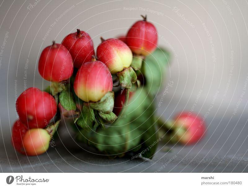 Johanniskraut Farbfoto Nahaufnahme Detailaufnahme Makroaufnahme Unschärfe Schwache Tiefenschärfe Lebensmittel Ernährung Umwelt Natur Pflanze Blume Sträucher