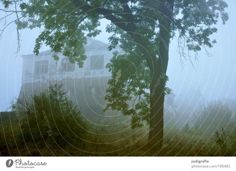 Morgens Farbfoto Morgendämmerung Umwelt Natur Landschaft Pflanze Nebel Baum Gras Wald Haus Ruine alt dunkel gruselig Stimmung Endzeitstimmung geheimnisvoll