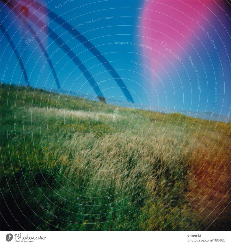 Tarantula Farbfoto mehrfarbig Außenaufnahme Experiment Lomografie Holga Licht Lichterscheinung Himmel Pflanze Blume Gras Grünpflanze Park Hügel Berge u. Gebirge