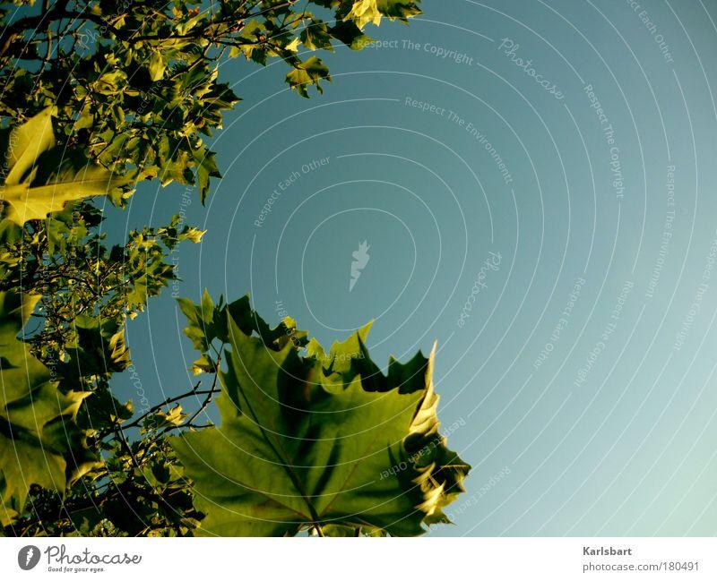 blattgold. Himmel Natur Ferien & Urlaub & Reisen grün Baum Pflanze Sonne Blatt Umwelt Leben Herbst Freiheit Park Hintergrundbild Design Ausflug