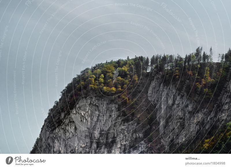 die kampenwand Natur Landschaft Felsen Berge u. Gebirge Chiemgauer Alpen Kampenwand Mischwald Wald Bayern natürlich Berghang Felswand Ausflugsziel Farbfoto