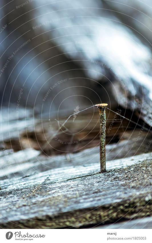 Immer noch eine Aufgabe Nagel Spinnennetz Holz Metall Stahl Rost stehen alt ästhetisch dunkel authentisch einfach gruselig kalt trist Mittelpunkt verbinden