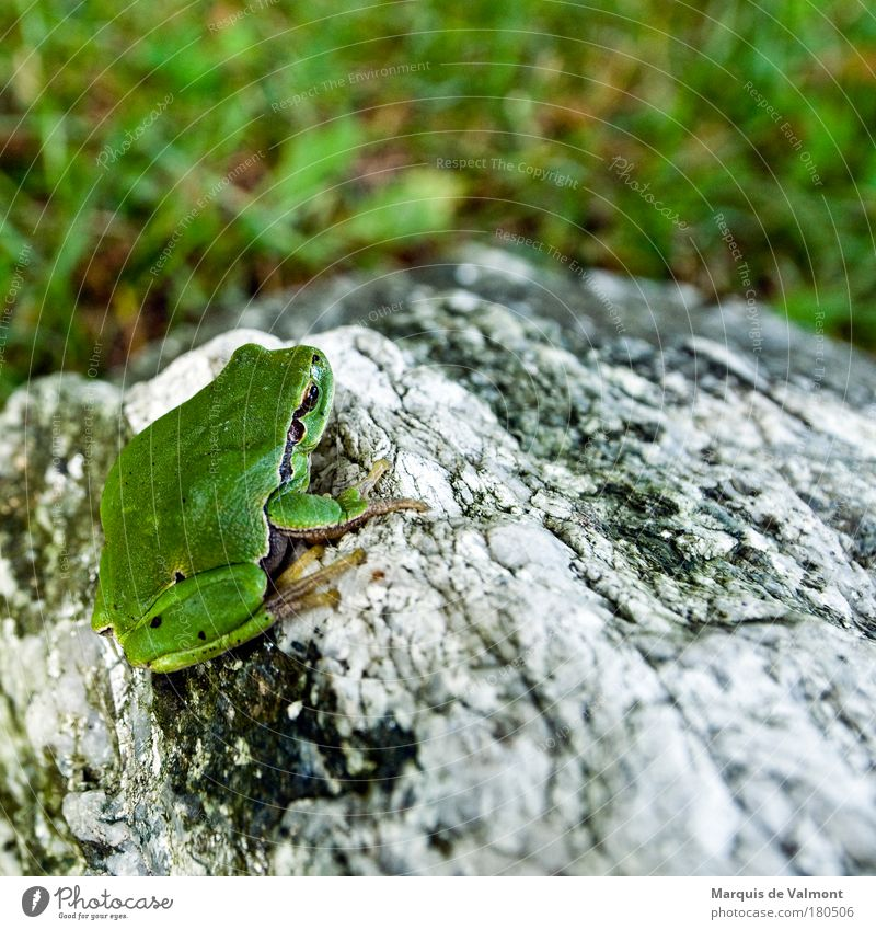 Grashüpfer Natur schön grün Tier Farbe Herbst Wiese Gras Stein warten Wetter Umwelt Felsen sitzen frisch Klima
