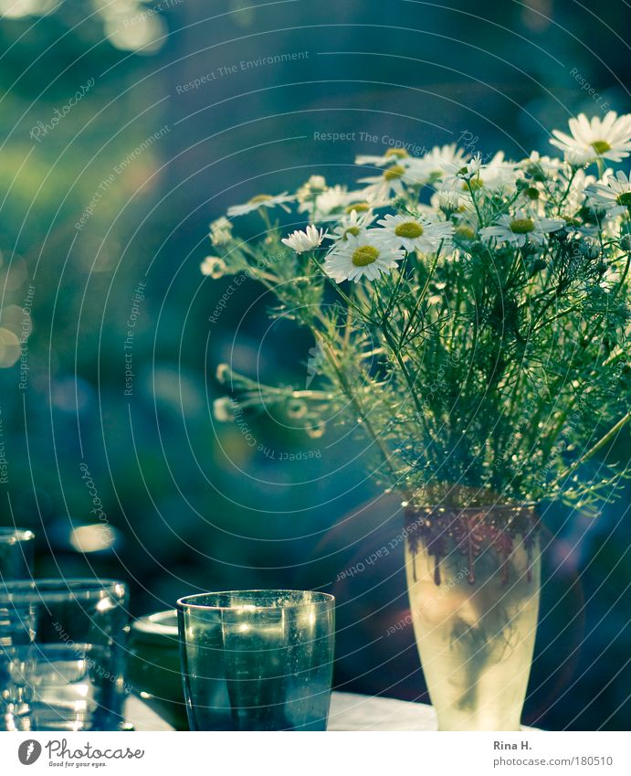 Ein schöner Tag weiß grün blau Freude ruhig Glück Zufriedenheit Stimmung Glas Getränk ästhetisch Lebensfreude genießen Leichtigkeit Vase Kamille