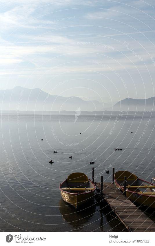 morgens am Chiemsee... Umwelt Natur Landschaft Tier Wasser Himmel Wolken Herbst Nebel Berge u. Gebirge See Bootsfahrt Ruderboot Steg Vogel Tiergruppe ästhetisch