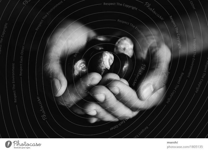 die schöne Zeit Mensch Hand Stimmung Sammlung Sammelgut Kastanie Kastanienbaum Herbst herbstlich Jahreszeiten Schwarzweißfoto Nahaufnahme Detailaufnahme