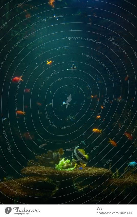 Aquarium mit tropischen Fischen exotisch schön Leben Ferien & Urlaub & Reisen Tourismus Meer Gesäß Natur Landschaft Pflanze Tier Wasser Sonnenlicht Korallenriff