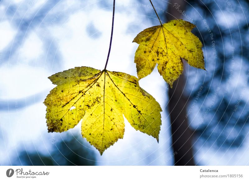 An einem dünnen Stiel Natur Pflanze blau Blatt Winter Wald schwarz Umwelt gelb Luft ästhetisch Zukunft einzigartig Trauer türkis hängen