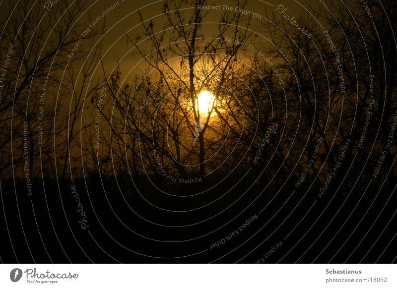düsterer Nachmittag Sonne Pflanze Winter Sträucher Ast Geäst Straßenrand laublos