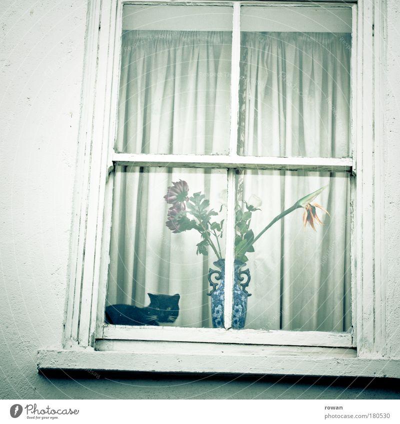 wohnlich Farbfoto Gedeckte Farben Außenaufnahme Menschenleer Tag Blume Haus Einfamilienhaus Bauwerk Gebäude Architektur Mauer Wand Fassade Fenster Tier Haustier