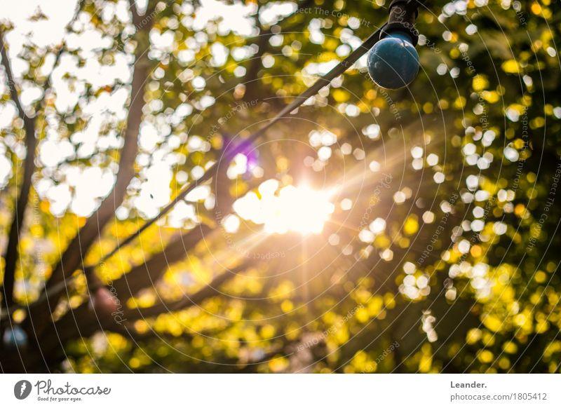 Die letzten Lichtstrahlen Umwelt Natur Schönes Wetter gelb gold grün herbstlich Herbst Sonne Garten Abend Blatt Farbfoto Gedeckte Farben mehrfarbig