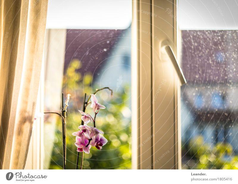Der Blick aus dem Fenster grün Blume rot Haus gelb Innenarchitektur Lifestyle hell Wohnung Häusliches Leben Freizeit & Hobby Dekoration & Verzierung gold Möbel